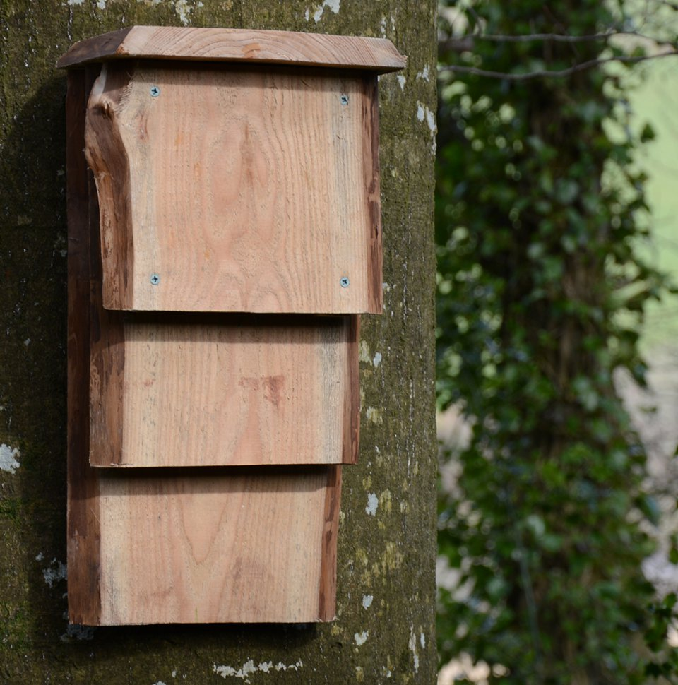 kent bat box free delivery ambios
